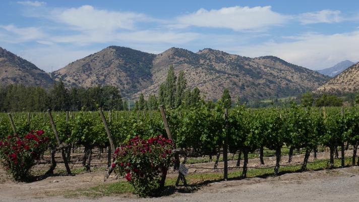 Im schönen Weingebiet südlich von Santiago