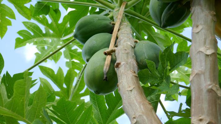 Ein Früchteparadies