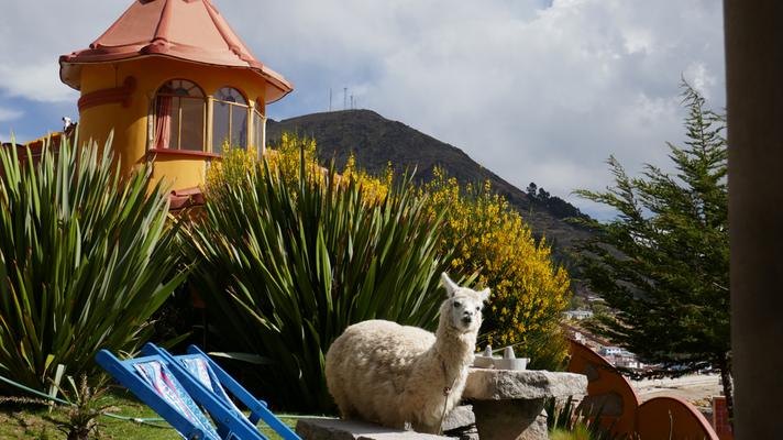 Unsere Unterkunft für 3 Nächste, mit eigenem Lama an der Copacabana in Bolivien