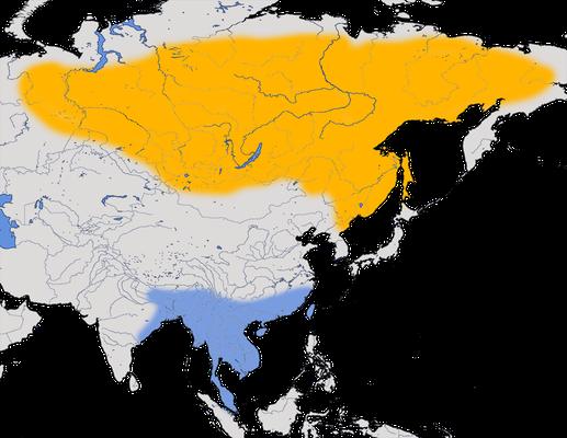 Karte zur Verbreitung des Gelbbrauenlaubsängers.