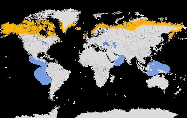 Karte zur Verbreitung des Odinshühnchens