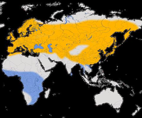 Karte zur Verbreitung des Kuckucks