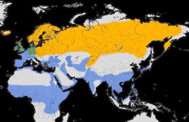 Karte zur Verbreitung der Bekassine