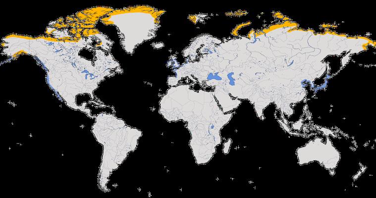 Karte zur Verbreitung der Ringelgans