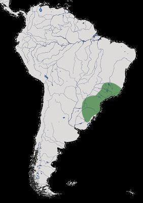 Karte zur Verbreitung des Langschwanz-Ameisenwürgers