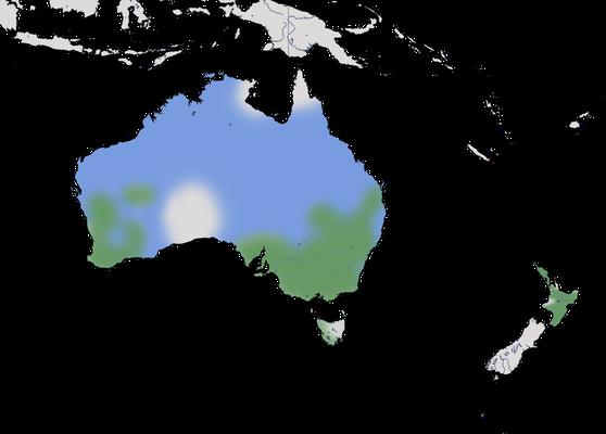 Karte zur Verbreitung des Haarschopftaucher (Poliocephalus poliocephalus)