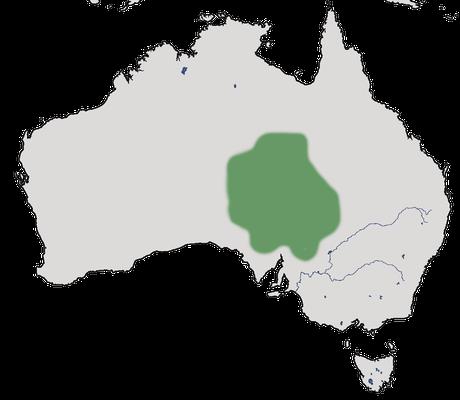 Karte zur Verbreitung des Zimtflöters.