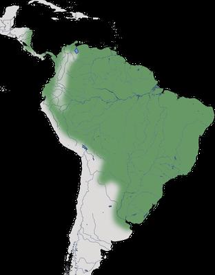 Karte zur Verbreitung des Marmorreihers