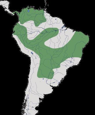 Karte zur Verbreitung des Rotrücken-Sensenschnabels
