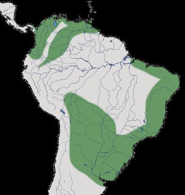 Karte zur Verbreitung des Graslandtyranns