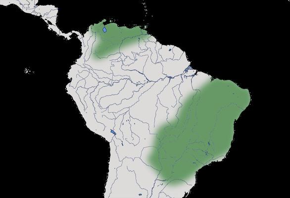 Karte zur Verbreitung der Schuppentaube