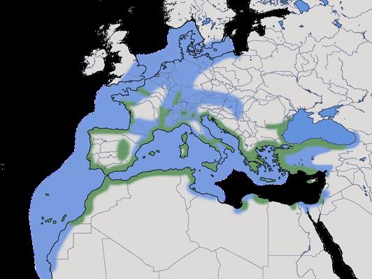 Karte zur Verbreitung der Mittelmeermöwe (Larus michahellis)
