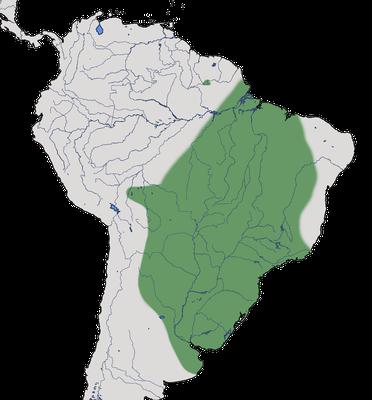 Karte zur Verbreitung des Bartstreif-Nonnentyranns