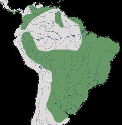 Karte zur Verbreitung des Rostschnäppertyranns