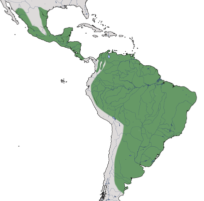 Karte zur Verbreitung des Schwefelmaskentyranns