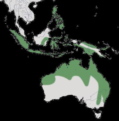 Karte zur Verbreitung der Wanderpfeifgans in Australien