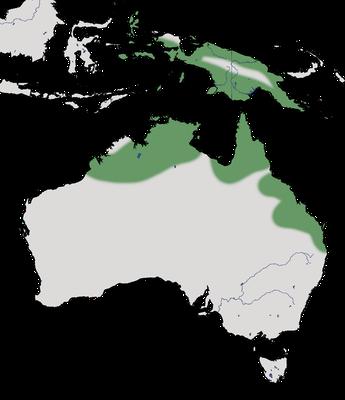 Karte zur Verbreitung der Radjahgans