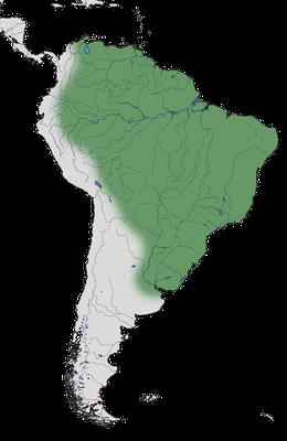 Karte zur Verbreitung der Nacunda-Nachtschwalben