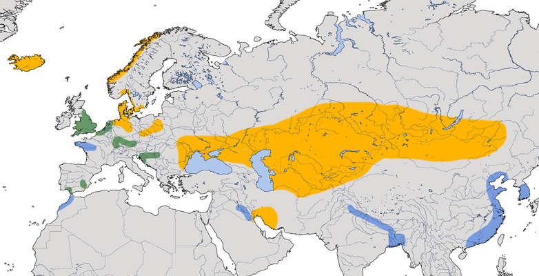 Karte zur Verbreitung der Brandgans