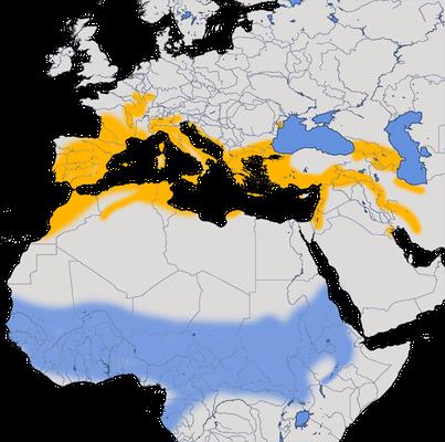 Karten zur Verbreitung des Rotkopswürgers (Lanius senator)