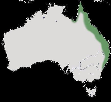 Karte zur Verbreitung des Buschhuhn