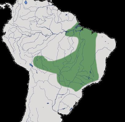 Karte zur Verbreitung des Weißbinden-Nonnentyranns