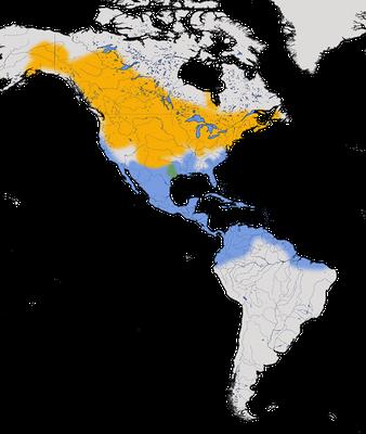 Karte zur Verbreitung der Blauflügelente