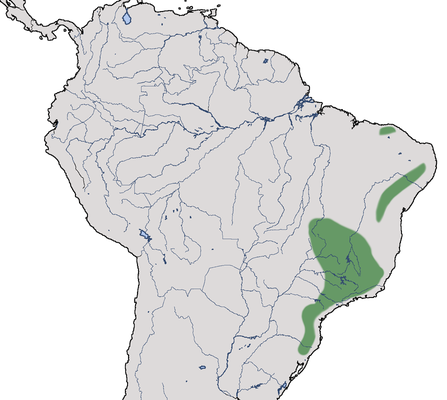 Karte zur Verbreitung des Kurzschopf-Dunkeltyranns