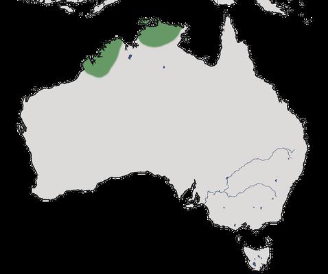Karte zur Verbreitung der Regenbogenpitta