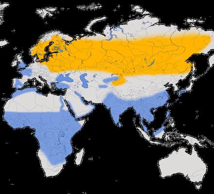 Karte zur Verbreitung des Waldwasserläufers