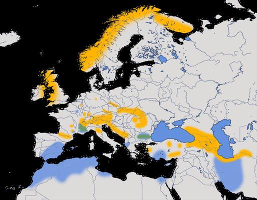 Karte zur Verbreitung der Ringdrossel (Turdus torquatus).