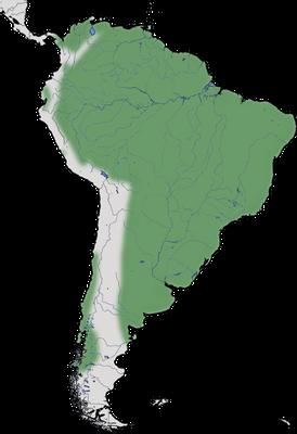 Karte zu Verbreitung des Cocoireihers