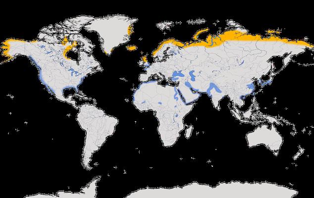 Karte zur Verbreitung des Alpenstrandläufers