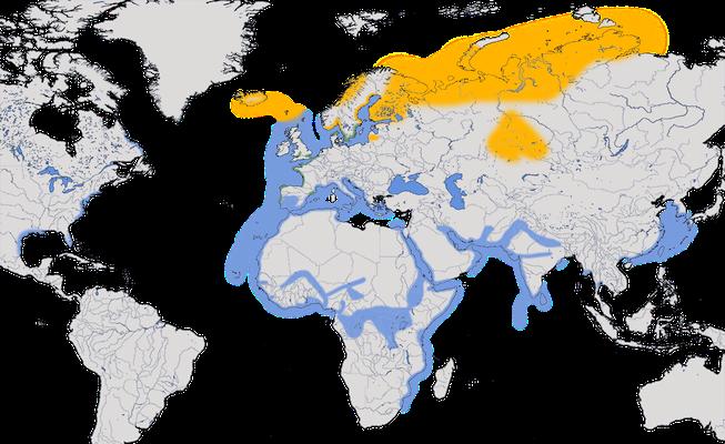 Karte zur Verbreitung der Heringsmöwe.