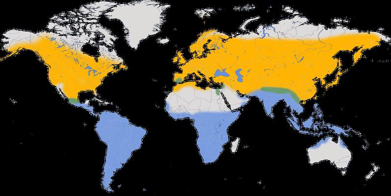 Karte zur Verbreitung der Rauchschwalbe