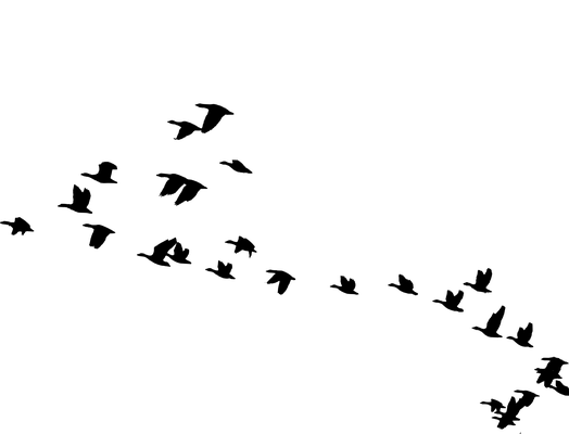 Tundrasaatgans - 2