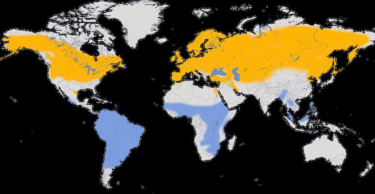 Karte zur Verbreitung der Uferschwalbe