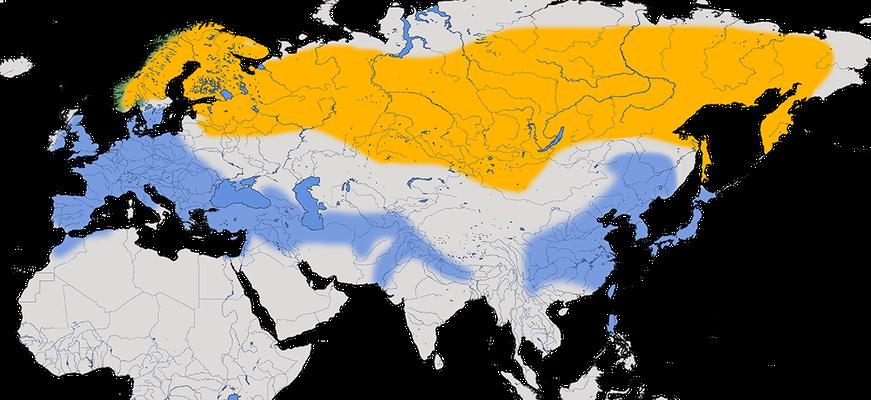 Karte zur Verbreitung des Bergfinkens