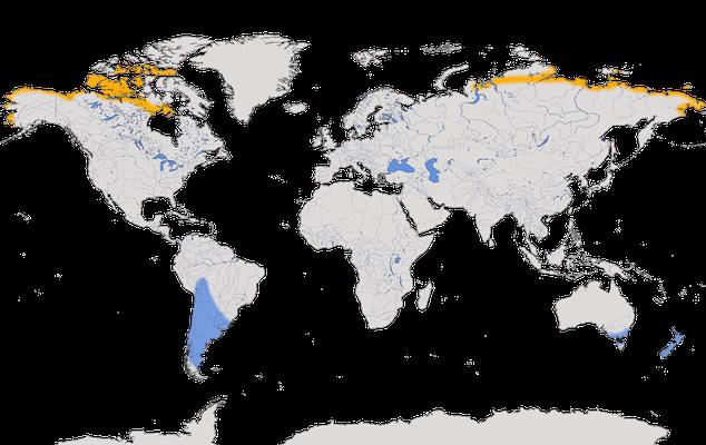 Karte zur Verbreitung des Graubruststrandläufers.