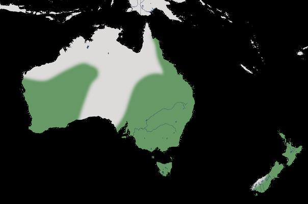 Karte zur Verbreitung der Australischen Löffelente
