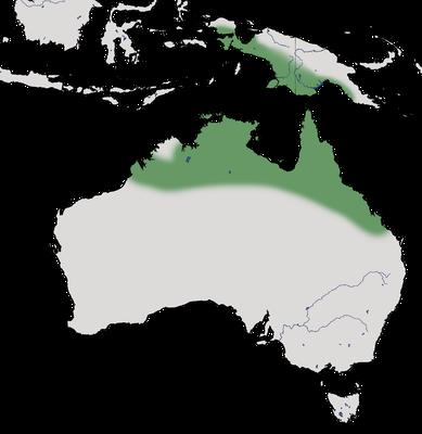 Karte zur Verbreitung der Australische Zwergente