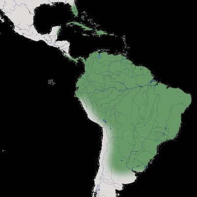 Karte zur Verbreitung des Glattschnabelanis