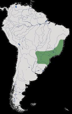 Karte zur Verbreitung des Weißschulter-Feuerauges