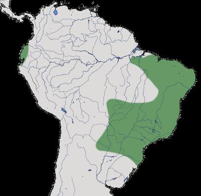 Karte zur Verbreitung des Graurücken-Wassertyranns