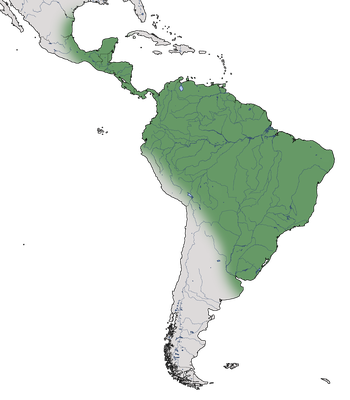 Karte zur Verbreitung des Eichhornkuckucks