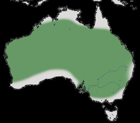 Karte zur Verbreitung des Zebrafinks