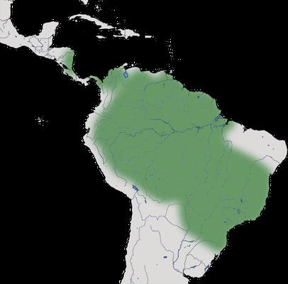 Karte zur Verbreitung des Grünibises