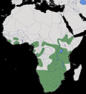 Karte zur Verbreitung des Wellenastrilds