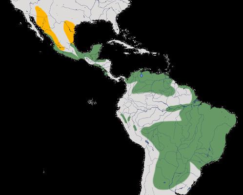 Karte zur Verbreitung des Braunschopftyranns