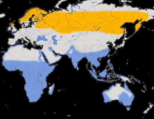 Karte zur Verbreitung des Grünschenkels